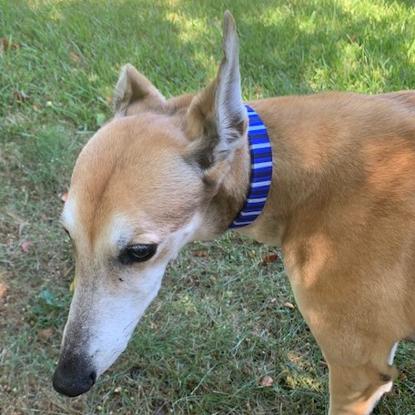 Picture of nylon dog collar - medium
